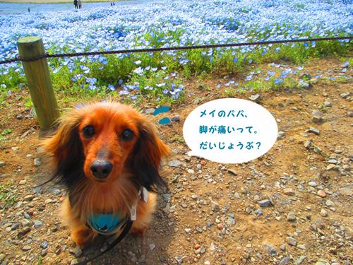 2016-4-hitachi44.jpg
