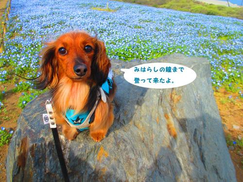 2016-4-hitachi45.jpg