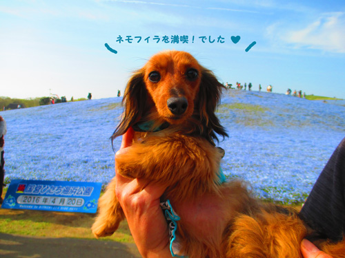2016-4-hitachi49.jpg