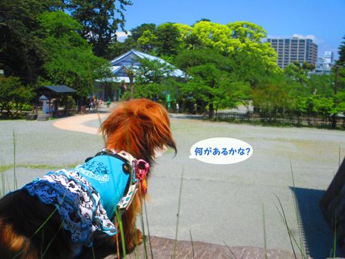 2016-5-odawara28.jpg