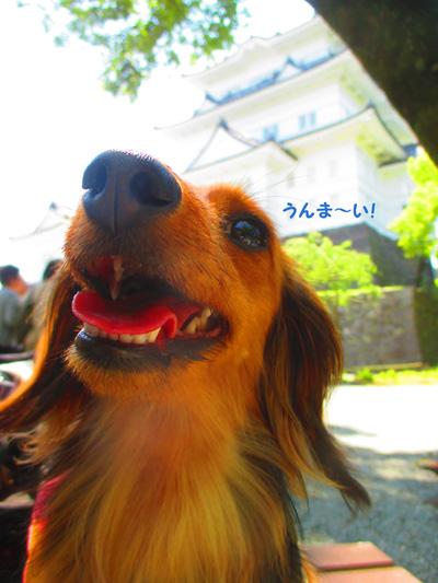 2016-5-odawara51.jpg