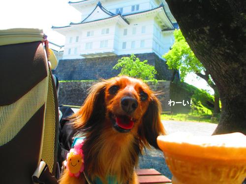 2016-5-odawara53.jpg