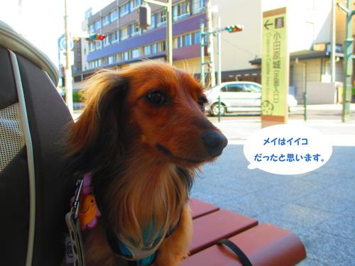 2016-5-odawara66.jpg