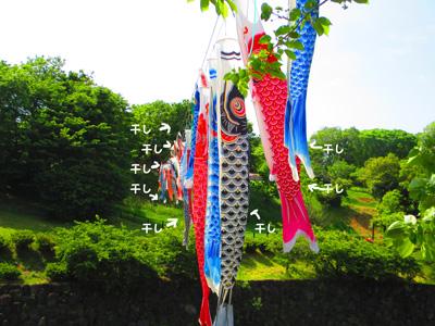 2016-5-satoyama12.jpg