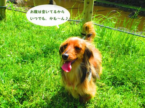 2016-5-satoyama15.jpg