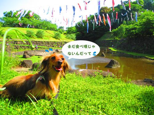 2016-5-satoyama17.jpg