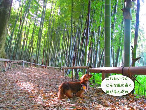 2016-5-satoyama30.jpg