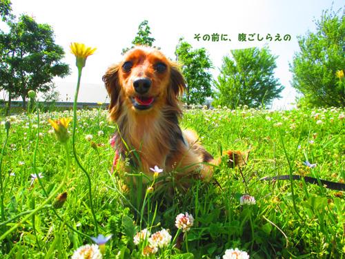 2016-5-satoyama4.jpg