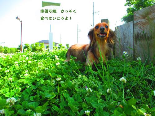 2016-5-satoyama7.jpg
