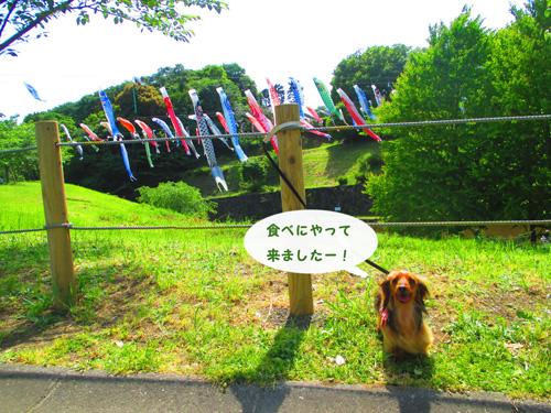 2016-5-satoyama9.jpg