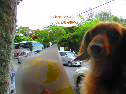 2016-6-kamakura10.jpg