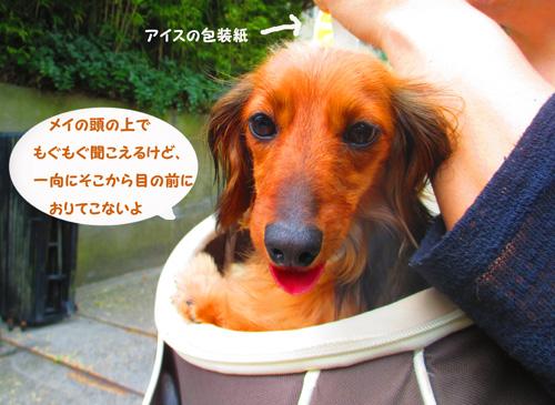 2016-6-kamakura12.jpg