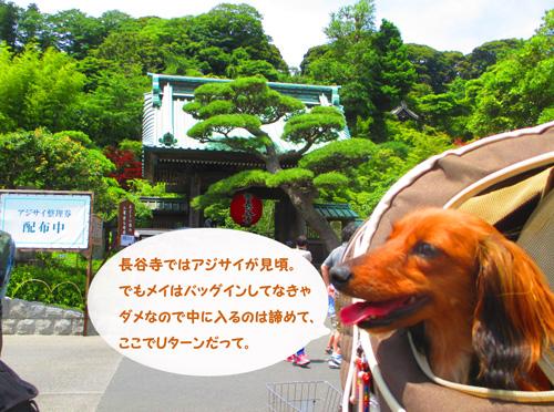 2016-6-kamakura18.jpg