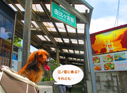 2016-6-kamakura28.jpg