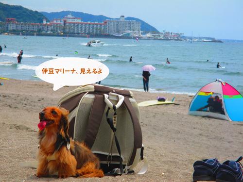 2016-6-kamakura33.jpg