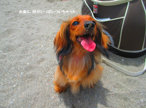 2016-6-kamakura35.jpg