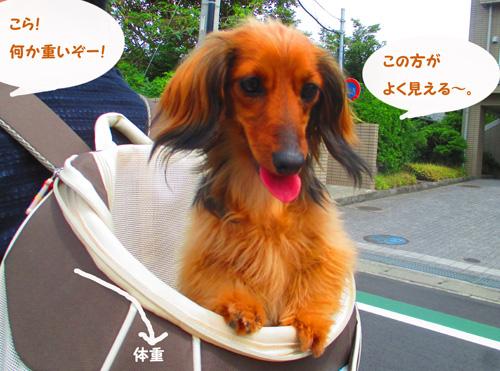 2016-6-kamakura4.jpg