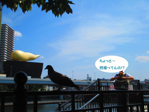 2016-8-asakusa34.jpg