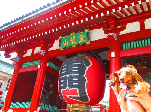 2016-8-asakusa59.jpg