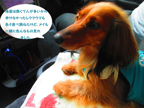 2016-8-asakusa72.jpg