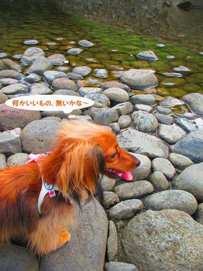 2016-satoyamasanpo14.jpg