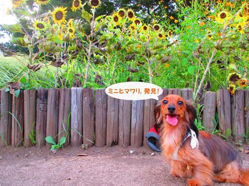 2016-satoyamasanpo21.jpg