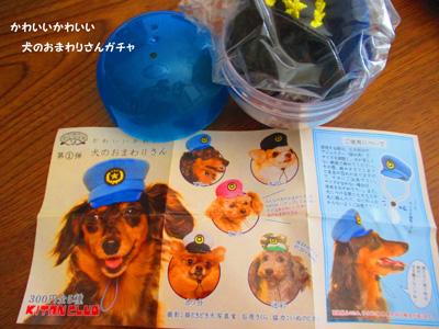 omawari-san1.jpg