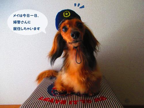 omawari-san2.jpg