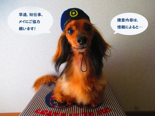 omawari-san3.jpg