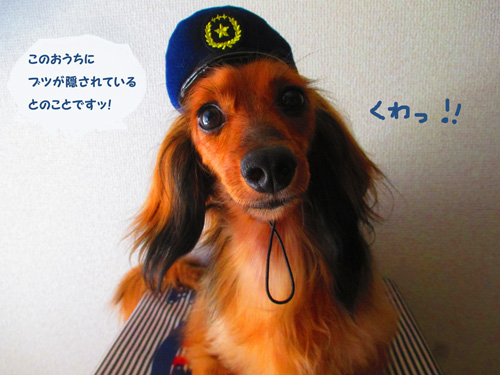 omawari-san4.jpg