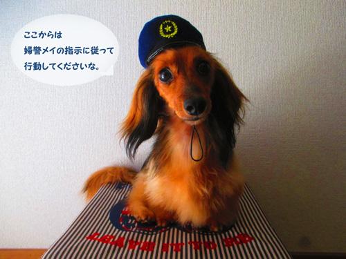 omawari-san5.jpg