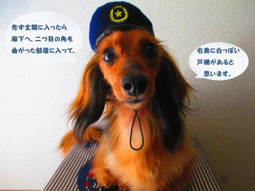 omawari-san6.jpg