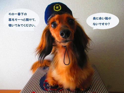 omawari-san7.jpg