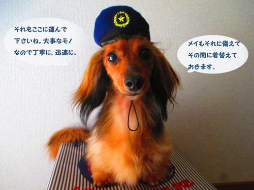 omawari-san8.jpg