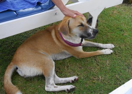 サンベッド横の犬