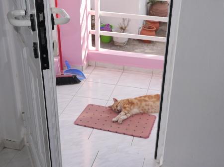 入り口のネコ