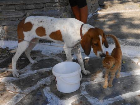 看板犬と子猫