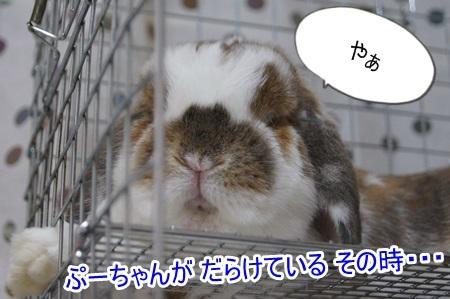 DSC00960_2016110315561607c.jpg