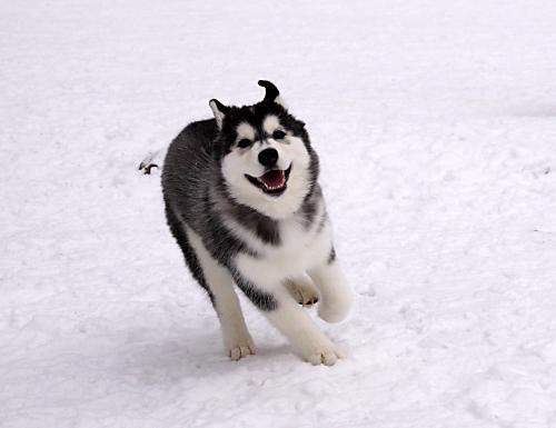 高山雪遊び