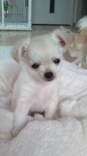 yamakashiさんのブログ-20090725093707.jpg