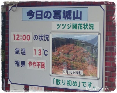 P5170150.jpg