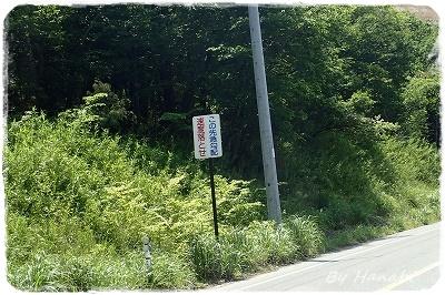 P5220064.jpg