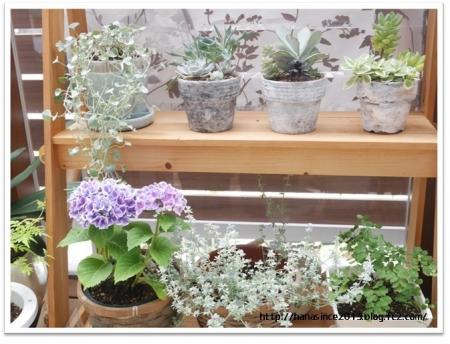 ガーデンルームで植物を3