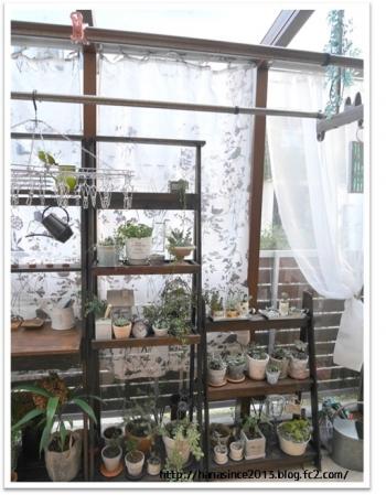 ガーデンルームで植物を2