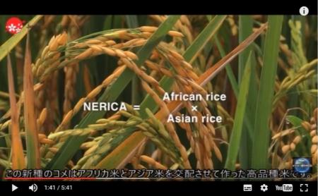 【動画】「日本は俺達の希望だ」 アフリカの食を救う日本の支援に世界中から感謝の声 [嫌韓ちゃんねる ~日本の未来のために~ 記事No11607