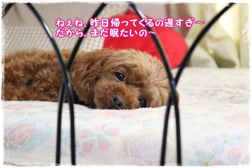 IMG_6526_201606251440176b2.jpg