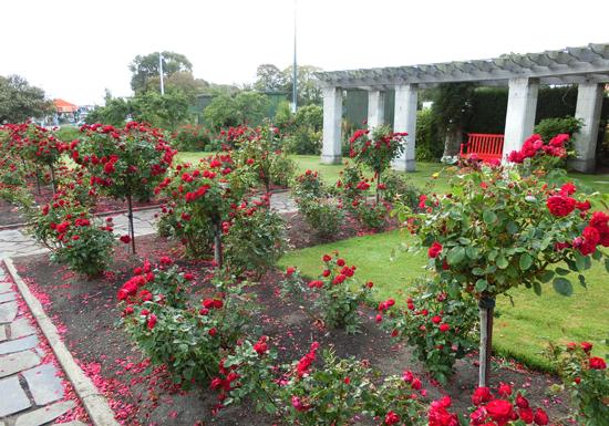oamaru-rose-garden.jpg