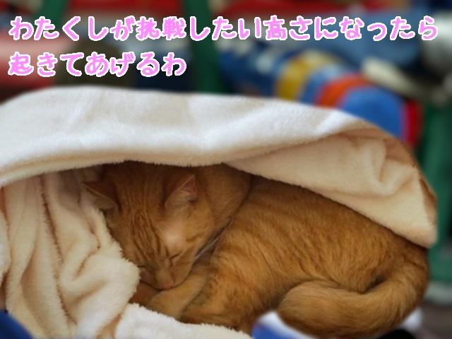 寝る小夏ニャウワ