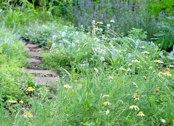 meadowgarden21.jpg