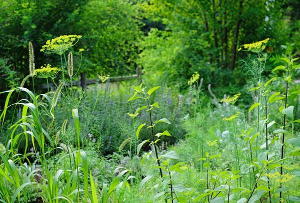 meadowgarden26.jpg